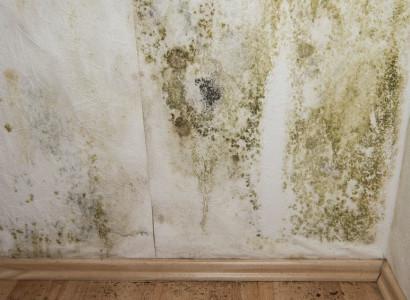 Jak na odstranění plísně ze stěn