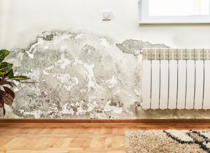 jak odstranit plíseň ze zdi