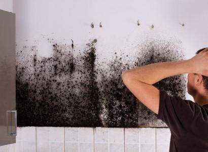 Jak odstranit plíseň v domě