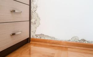 jak odstranit plíseň ze zdi Praha 1