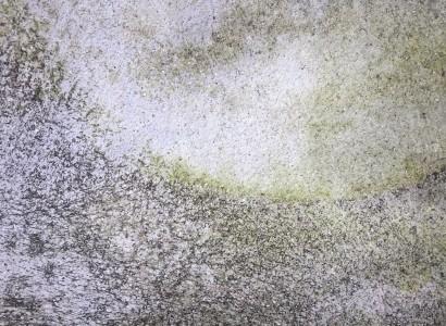 Vlhkosť v dome: ako postupovať pri odstránení plesne zo stien