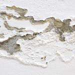 jak odstranit plíseň ze zateplené fasády