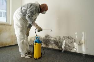 likvidace plísně a čištění zdi