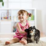 odstranění alergenů a roztočů z koberce