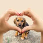 odstranění psích chlupů koberec