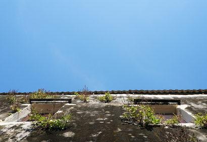 plíseň a fasády